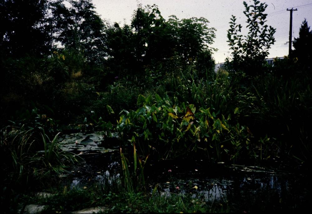 Cottonwood Community Gardens