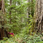 Cortes_Island_Old_Growth-76
