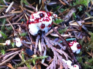 bleeding fungus