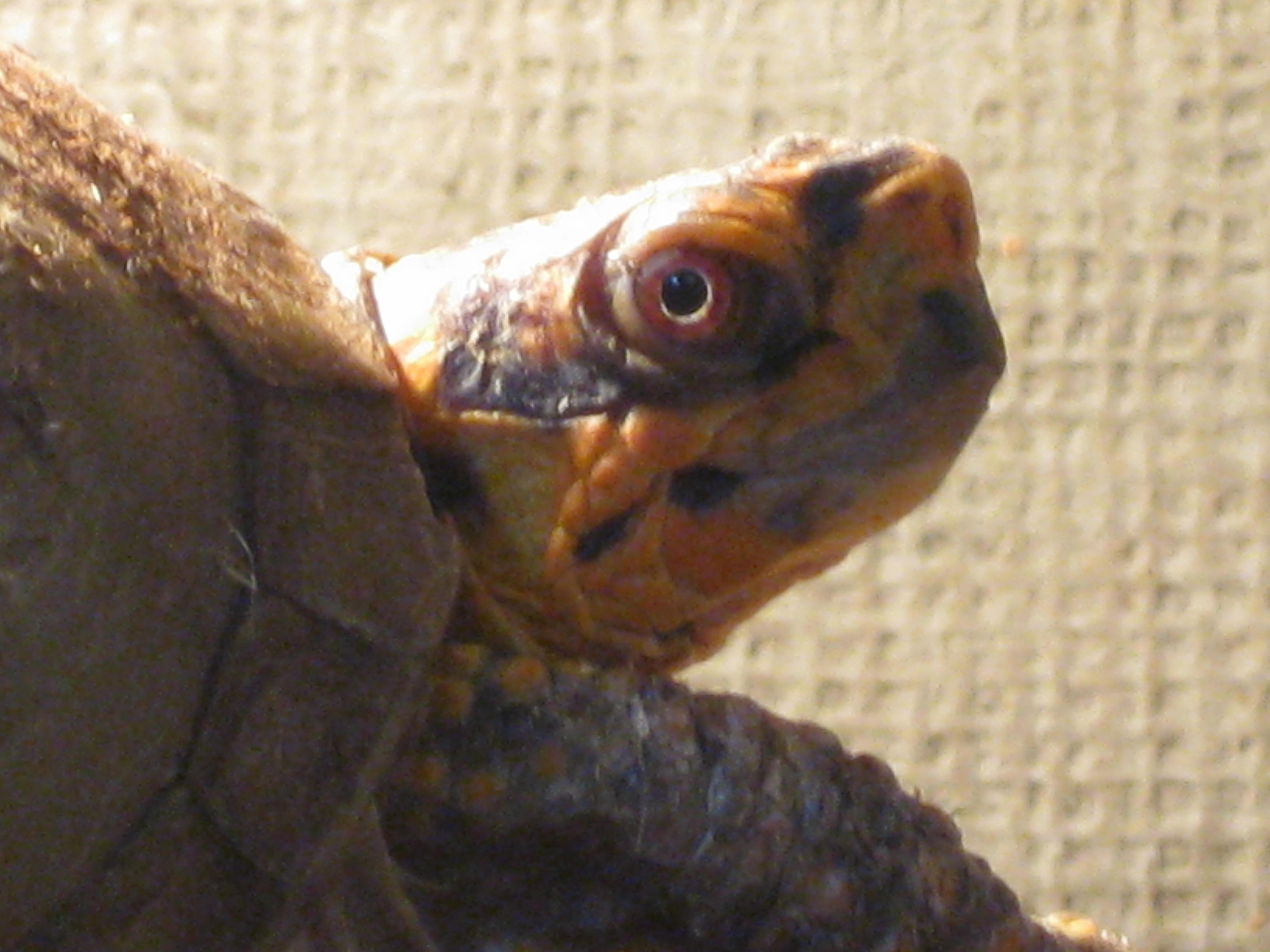 THE SHOW SO FAR Animals - Jonathan tortoise mind blowing 182 years old