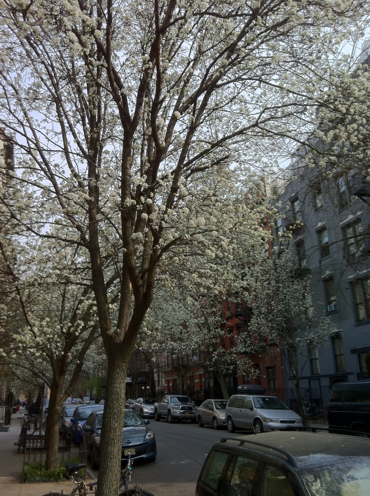 East Village spunk trees