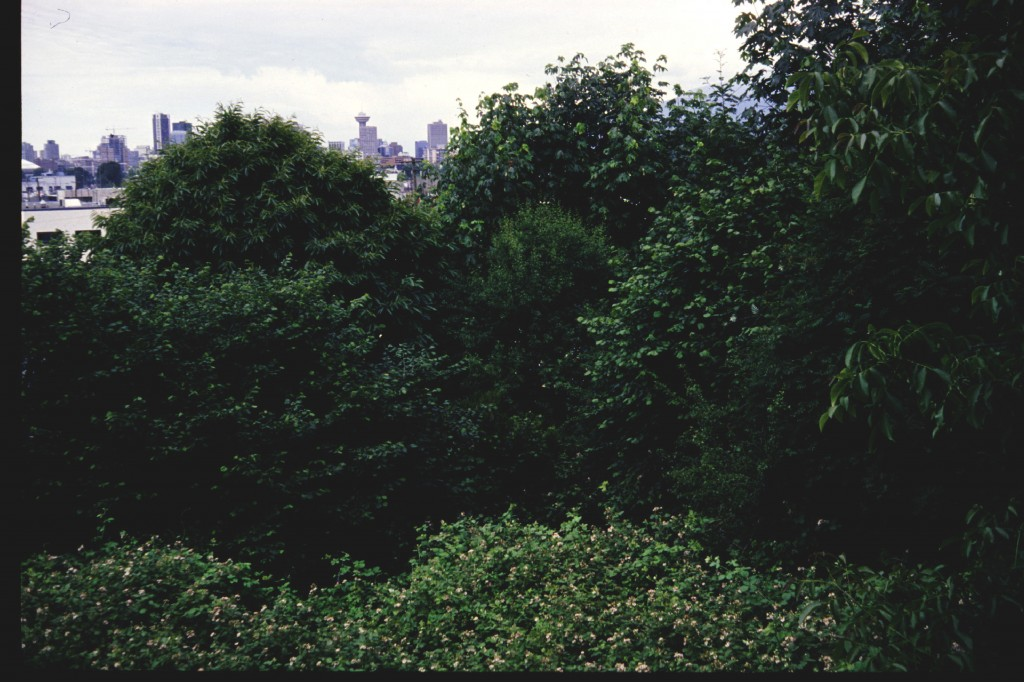a well developed emergent forest of both native and exotic species - East Vancouver (1994)