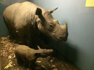 sumatran_rhino